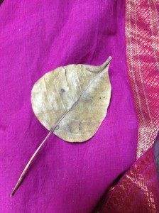 A leaf from the Bodhi tree that I gathered in India